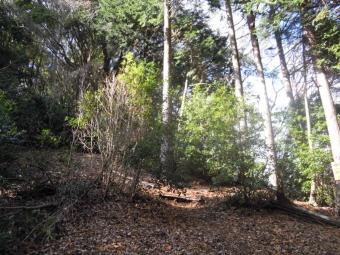 日向山分岐をまっすぐ進んでしっかり根を張った樹191218
