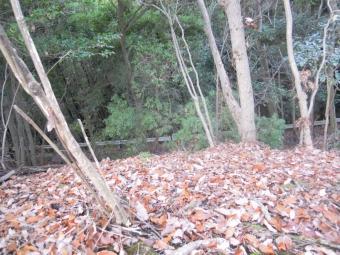 林道が見えて来た191218