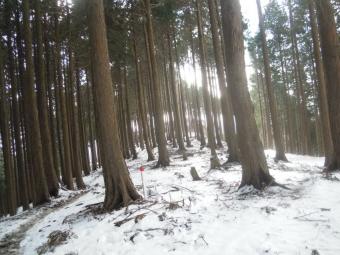 南側は雪が少ない200119