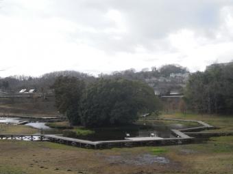 厳島湿性公園200125