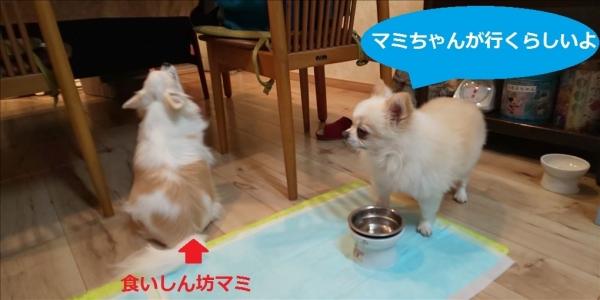 マミちゃんがいくらしいよ.jp