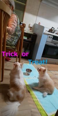 Trick.jpg