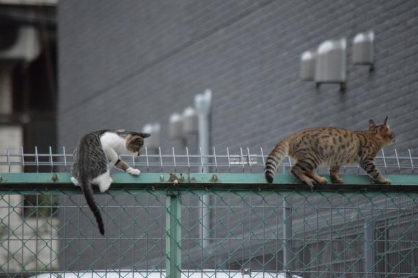 猫43,.47