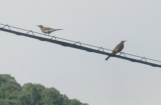 なんて鳥?