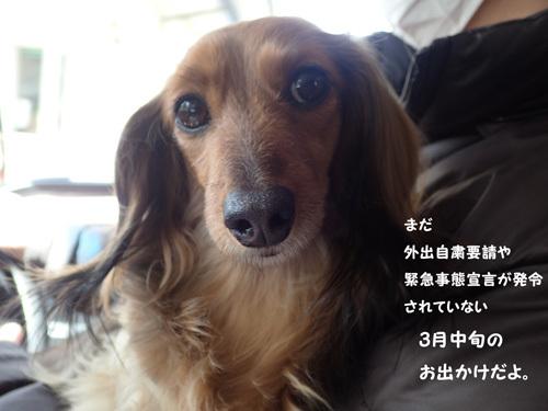 yamanakako3.jpg