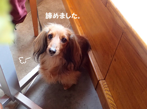 yamanakako33_20200611222209d68.jpg