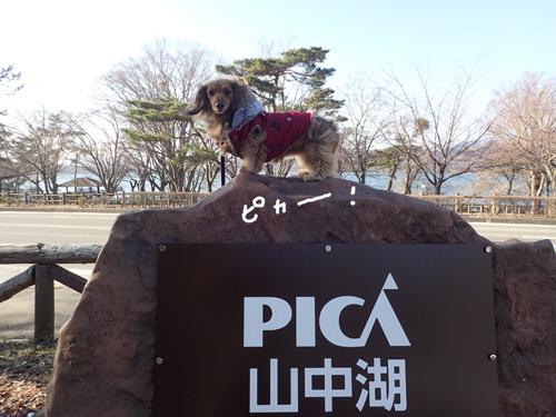 yamanakako77.jpg