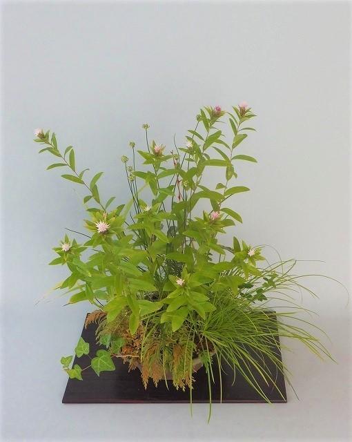 R1-10-12オケラ・ヤマラッキョ寄せ植え