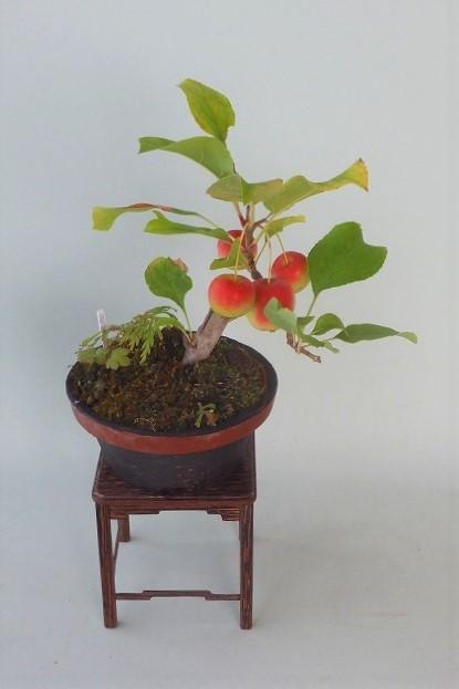R!-10-12ヒメリンゴ (2)