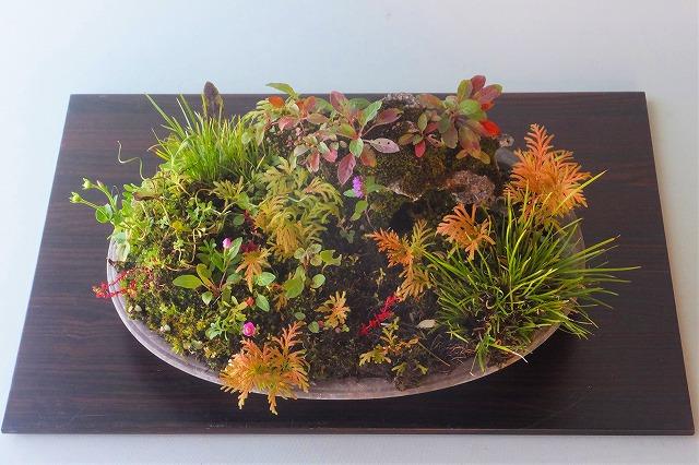 R1-10-31草紅葉