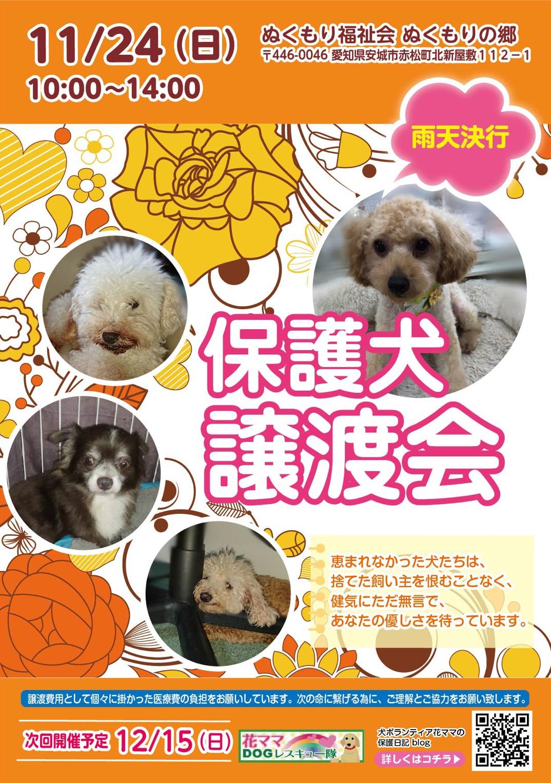 譲渡 犬 愛知 会 県