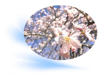 20200317桜A