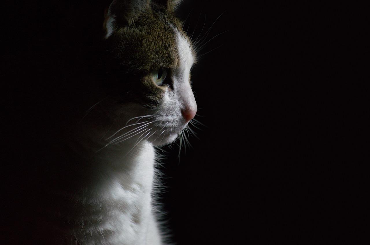 animal-4373152_1280.jpg