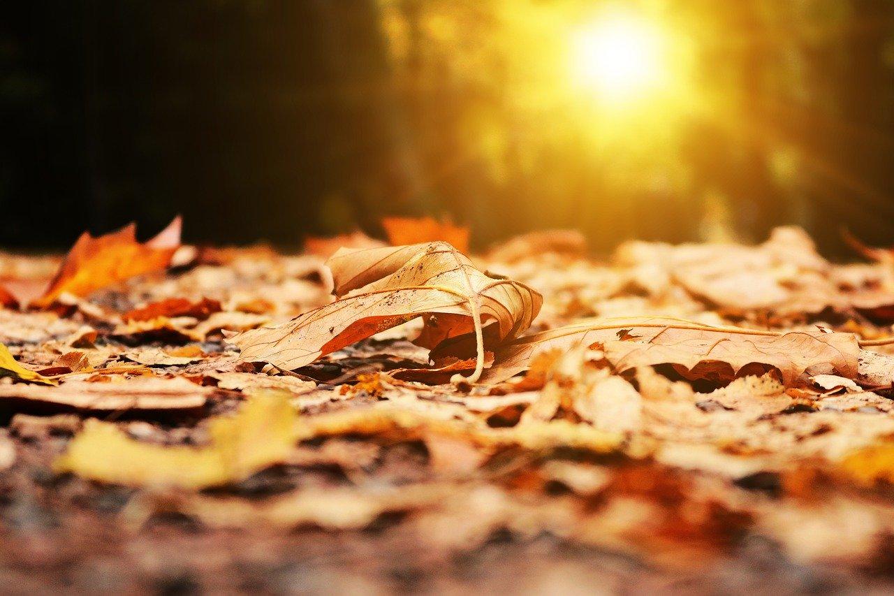 autumn-2874547_1280.jpg
