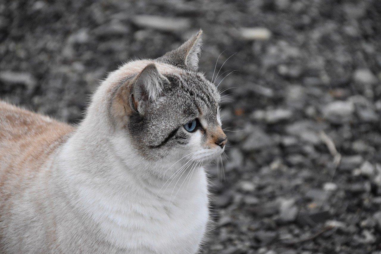 cat-4822709_1280.jpg