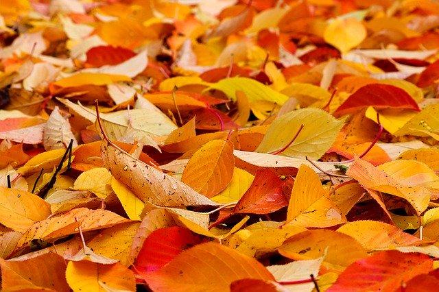 fall-foliage-4635354_640.jpg