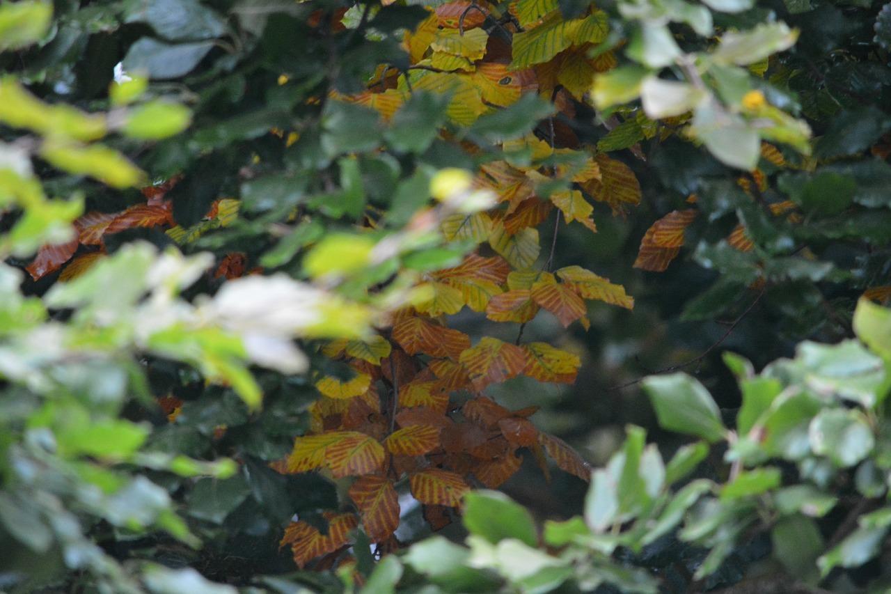 leaf-2802831_1280.jpg