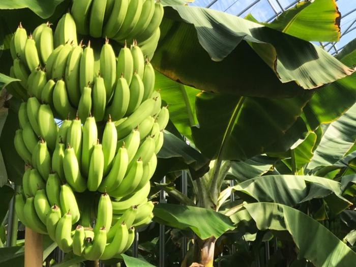banana19123002.jpg