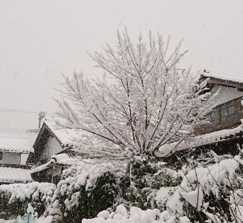 20200218 雪降り12