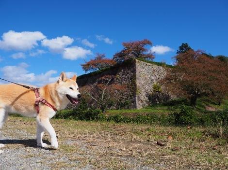 さくらと篠山城跡