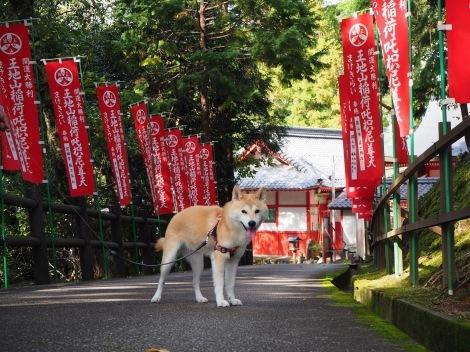 まけきらい稲荷神社