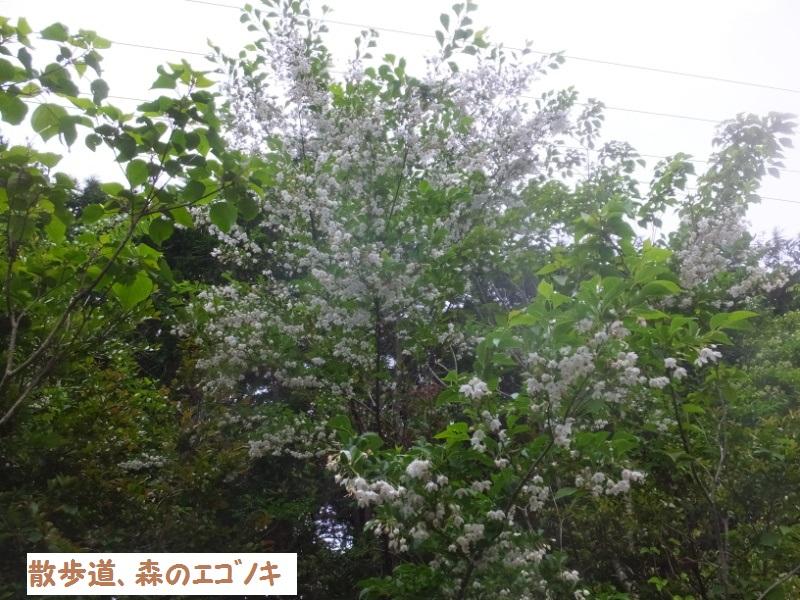 DSCF3502_1_20200526091039b3b.jpg