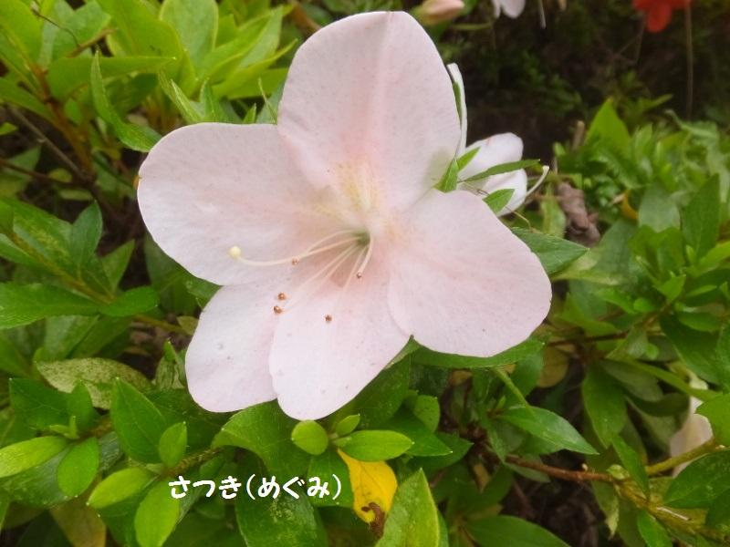 DSCF3544_1.jpg
