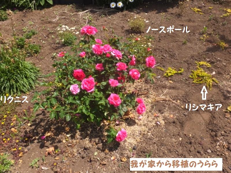 DSCF3558_1_20200528084515aa9.jpg
