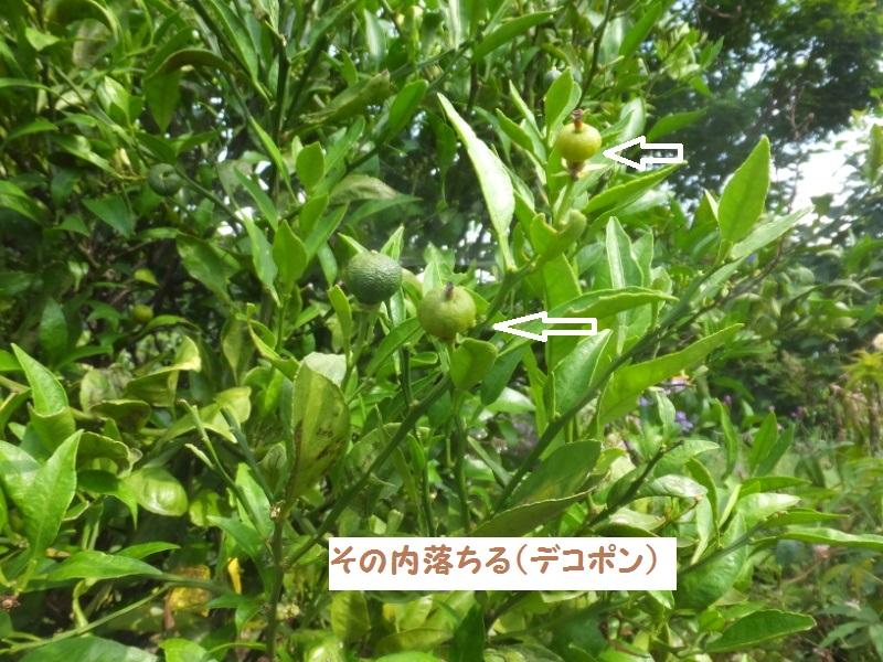 DSCF4100_1.jpg