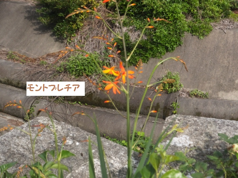 DSCF4194_1_20200621093613dab.jpg