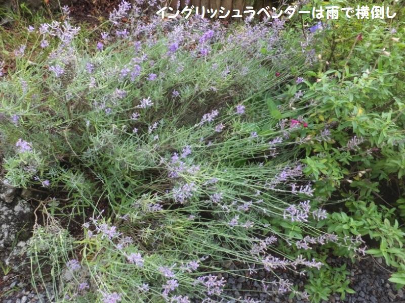 DSCF4214_1.jpg
