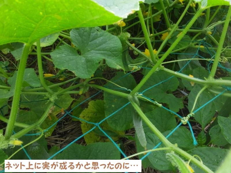 DSCF4222_1_202006221503225ec.jpg