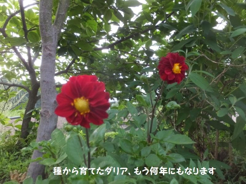DSCF4276_1_2020062515042850c.jpg