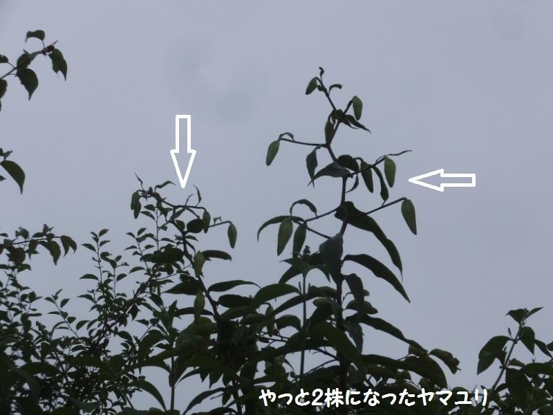DSCF4310_1_20200626140457c4d.jpg