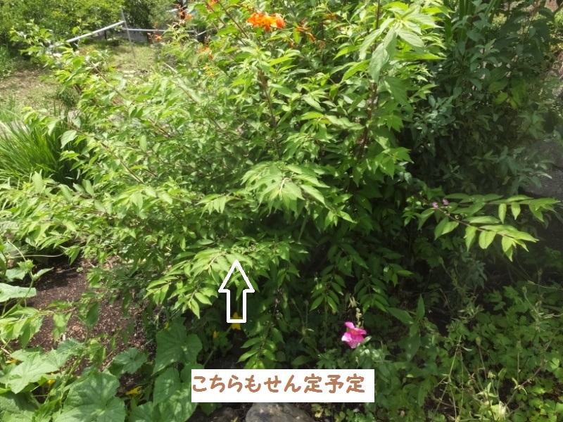 DSCF4372_1_20200627192002879.jpg