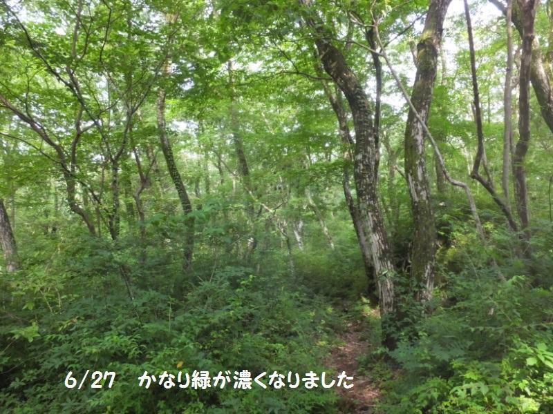 DSCF4375_1.jpg