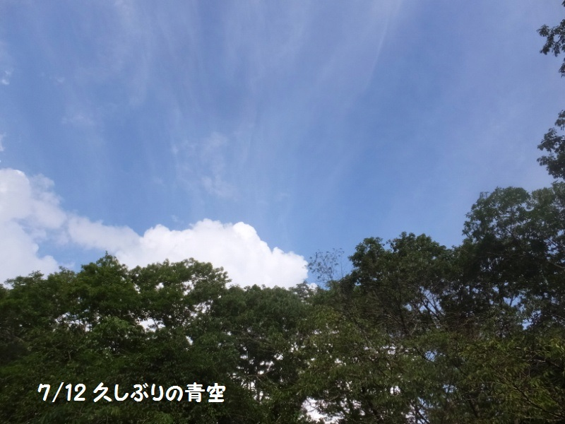 DSCF4812_1_20200713185440560.jpg