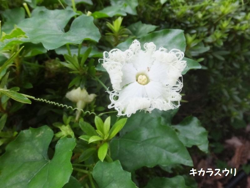 DSCF4875_1.jpg