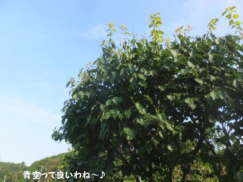 DSCF5326_1.jpg