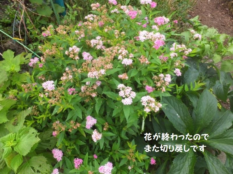 DSCF5346_1.jpg