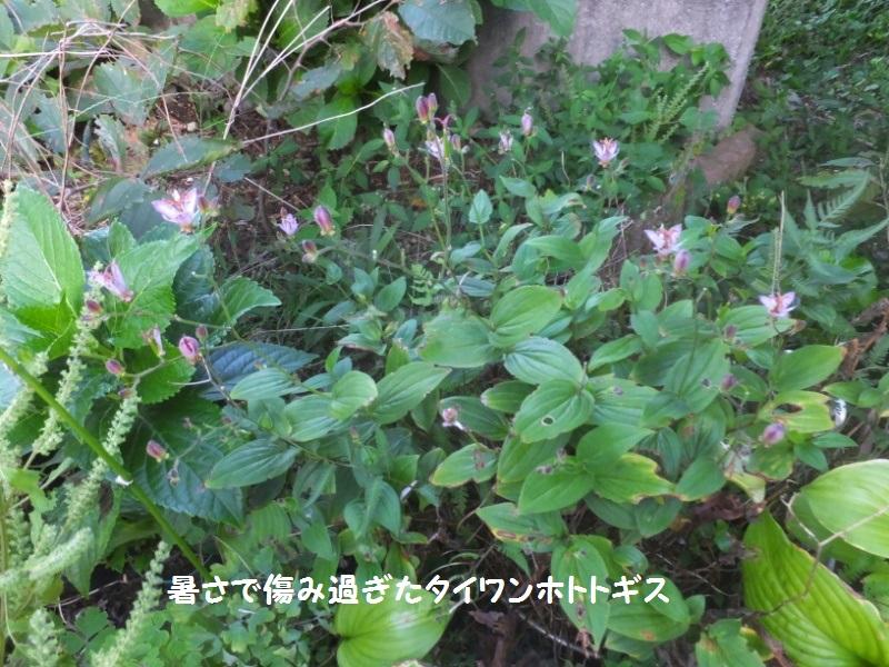 DSCF5960_1_20200922091012aa6.jpg