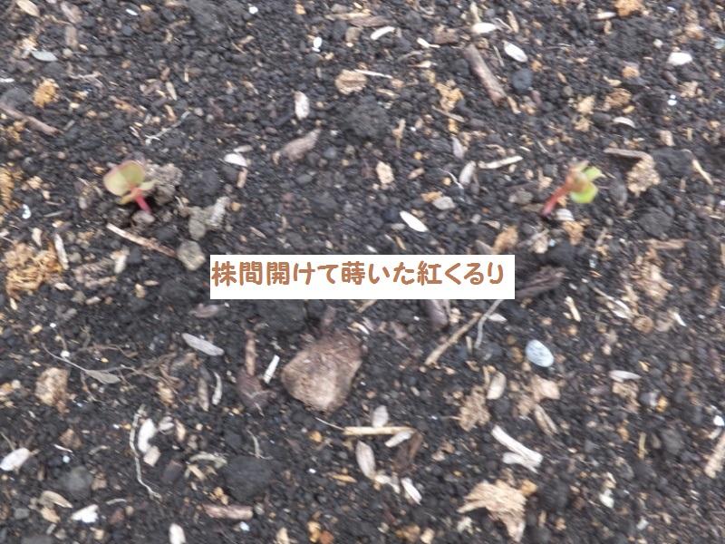 DSCF6023_1_202009240910010c1.jpg