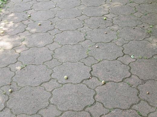 道路に落ちた梅