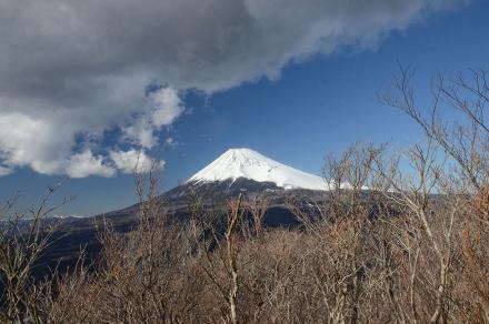 越前岳平坦地から富士山2