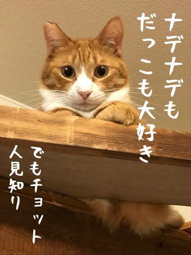 もみじ1-1