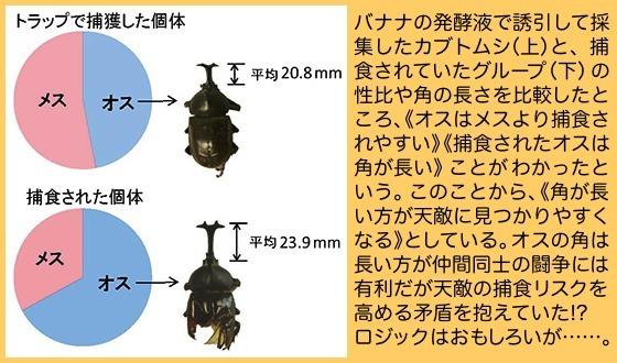 04甲虫角論図から