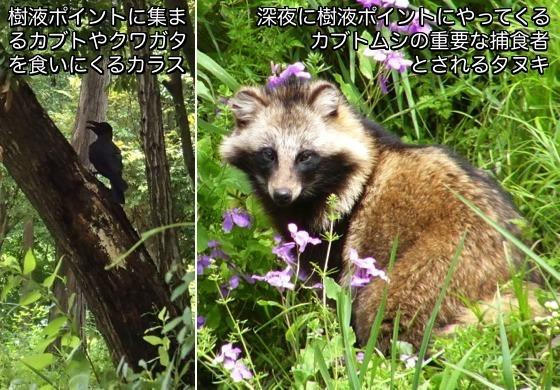 03カラス&タヌキ