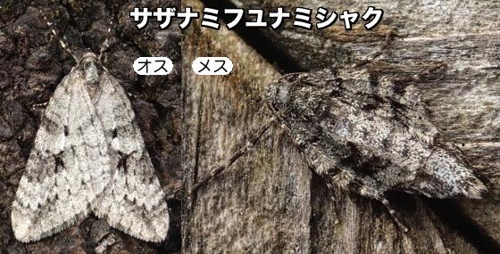 09漣冬波尺♂♀F