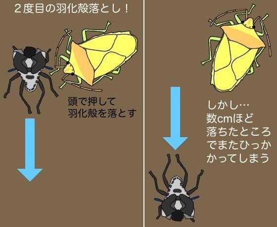 04羽化殻落とし図解E2