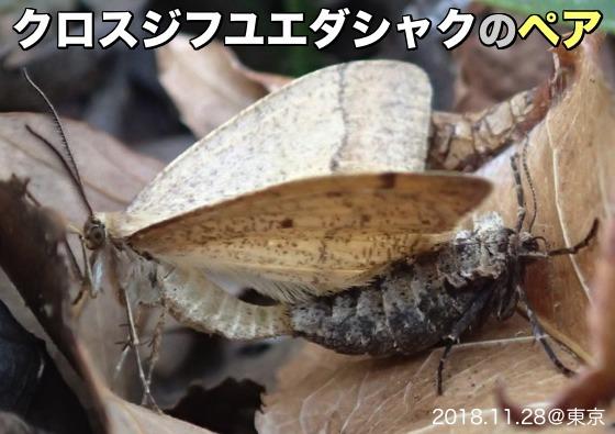 01黒筋冬枝尺ペアA